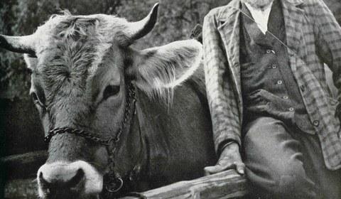 Der Montafoner Viehmarkt