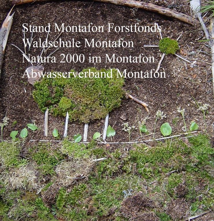 Stand Montafon Forstfonds